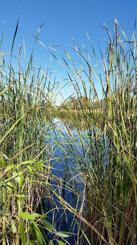 Meadow Brook open space