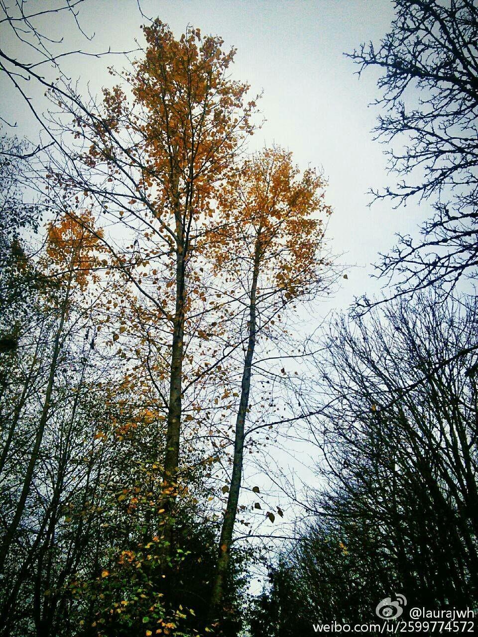 浅冬·秋黄@Soft Winter·Autumn Yellow