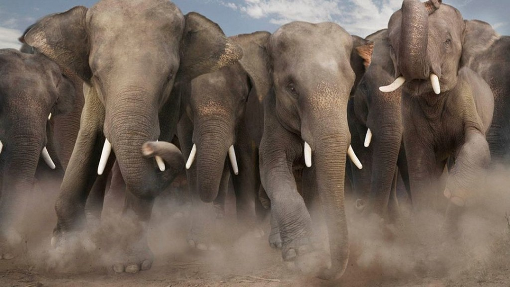 How to Survive an Elephant Stampede