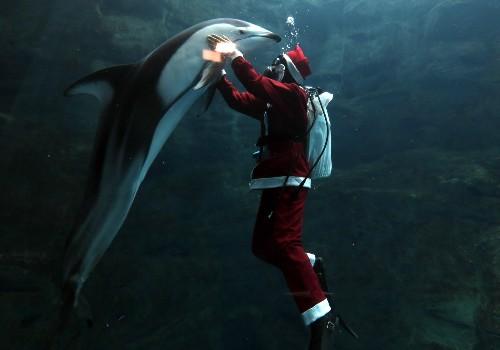 Santa Diving in Japanese Aquarium: Pictures