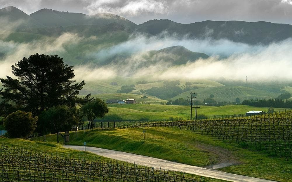 Love your wine? Then you need to take a tour of California's Central Coast