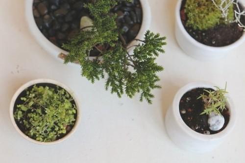 DIY: No-Fuss Bonsai for Beginners