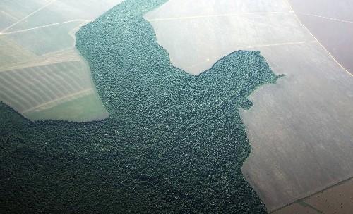 Brazil deforestation soars in July, threatening EU trade deal
