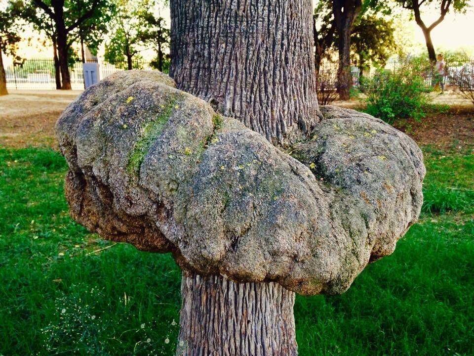Mal formación de árbol