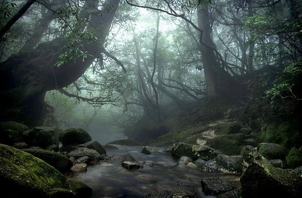 Wooded Wonderland: Yakushima