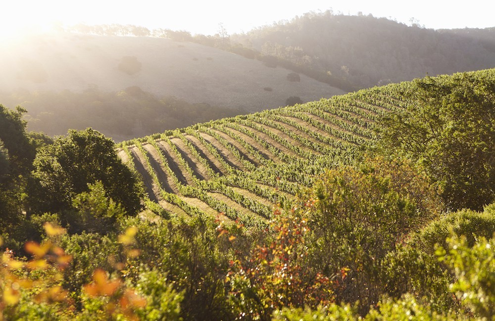 The Best Appointment-Only Tasting Experiences in Napa and Sonoma Wine Country