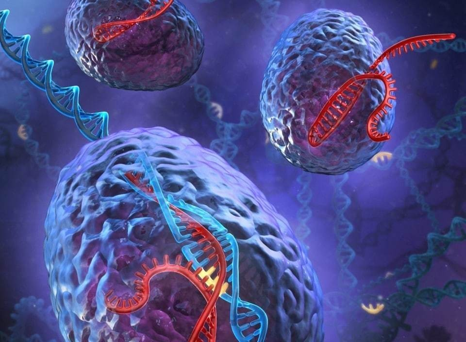 Scientists announce new gene-editing techniques aimed at common mutations