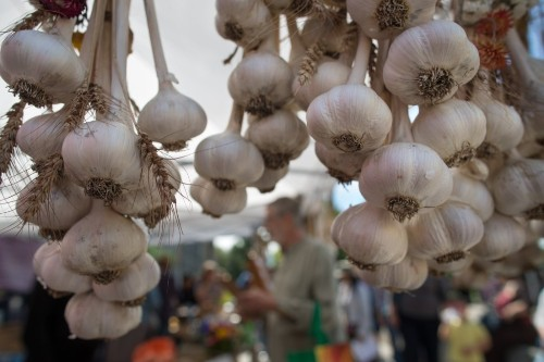 Plant Heirloom Garlic Now, Reap Rewards in the Spring