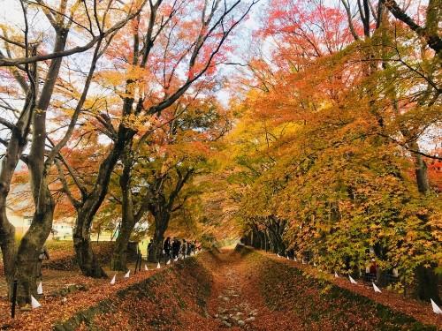 旅 日本 Japan