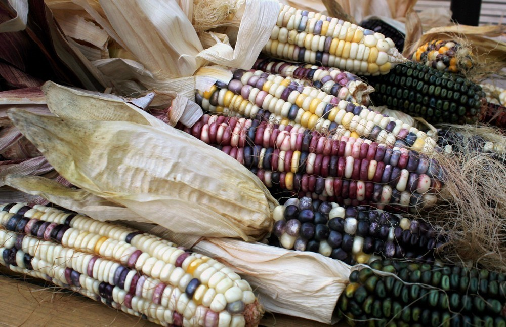 Tribes Revive Indigenous Crops, And The Food Traditions That Go With Them