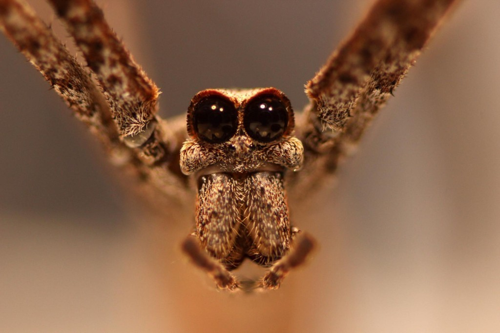 These spiders hear without ears–plus other fascinating animal stories