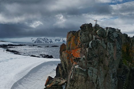 Antarctica and South Georgia: photos from the ends of the Earth