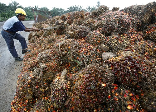 EU singles out palm oil for removal from transport fuel