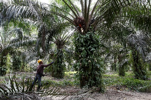 Malaysia in talks with several partners to produce palm oil-based biojet fuel - industry body