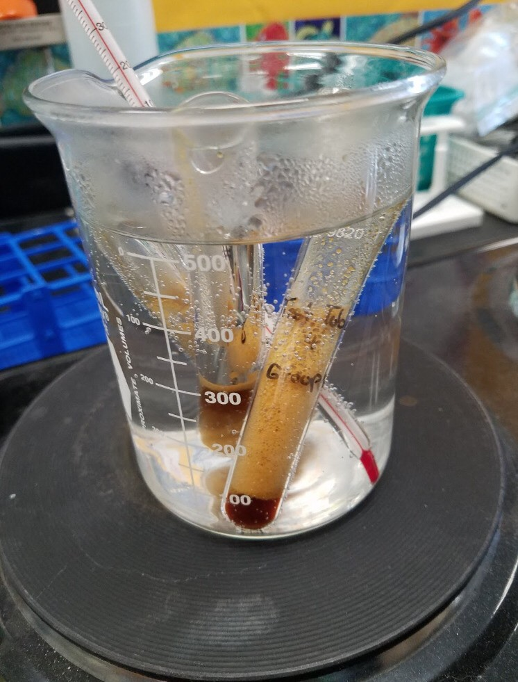 This image falls into Science and Laboratory Skills in my Achievement section. The Yeast Respiration Lab was one the more complicated experiments in my opinion. It got me more into using my previous knowledge of cellular respiration and pH to solve the question instead of just memorizing. I'm most proud of learning how to analyze data in lab experiments.