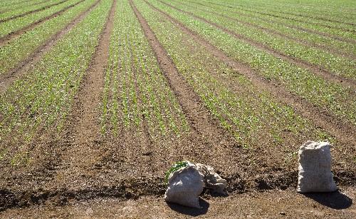 Einstieg ins Gemüsesaatgutgeschäft gibt KWS Saat Schwung
