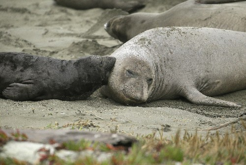 Seal takeovers, downed trees: Parks clean up post-shutdown