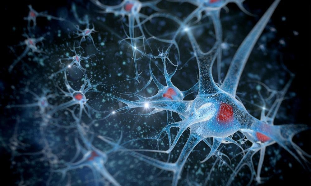 Stem cell brain implants could 'slow ageing and extend life', study shows