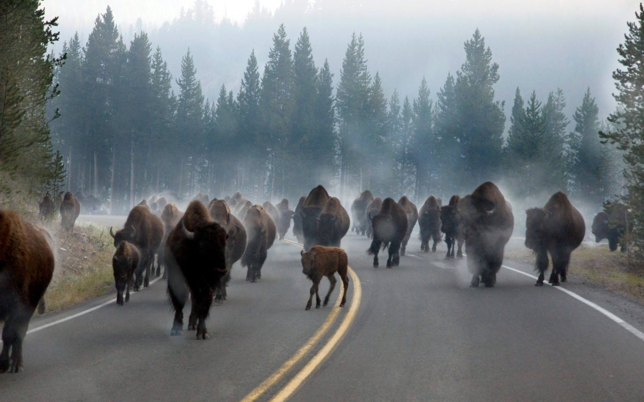 Buttes and beasts: amazing US national parks – in pictures