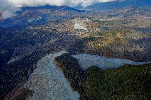U.S. proposal would lift logging ban in pristine Alaska forest
