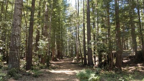 California redwood forest latest alternative burial site