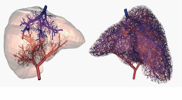 Researchers Now Able To 3D Print Working Blood Vessels
