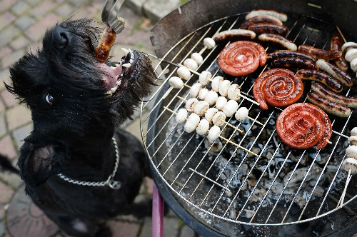 Grilling and Chilling: Doggone Good Food Magazines for Your July 4