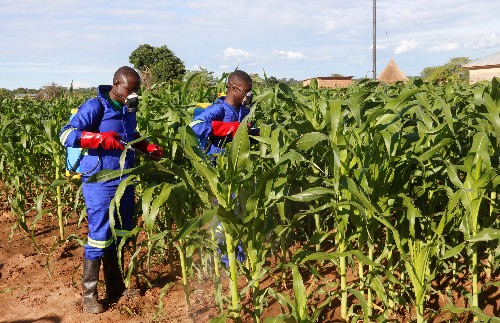 Scientists find crop-destroying caterpillar spreading rapidly in Africa