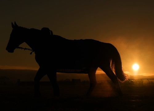 The Beauty of Horse Racing in England: Pictures