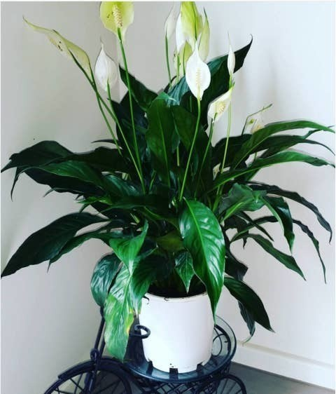 10 Amazing House Plants That Can Actually Purify Your Home – Tea Time Flip