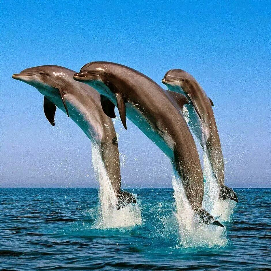 Dolphins - cover