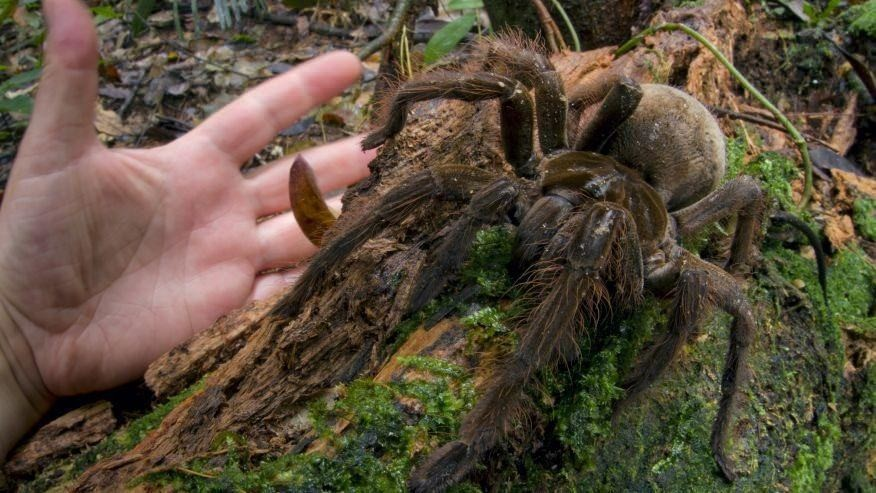 Scientist slammed for killing puppy-sized  spider