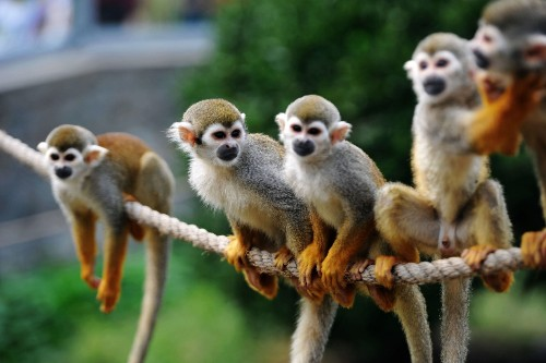Squirrel Monkeys Welcome Mid-Autumn Festival in China: Pictures