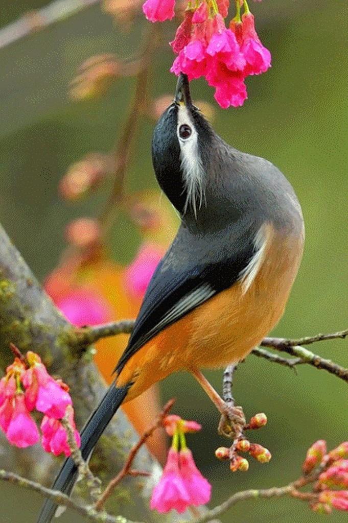 Birding - Cover