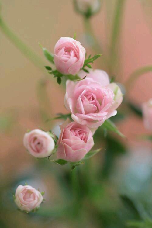 fiori e colori.. - Couverture