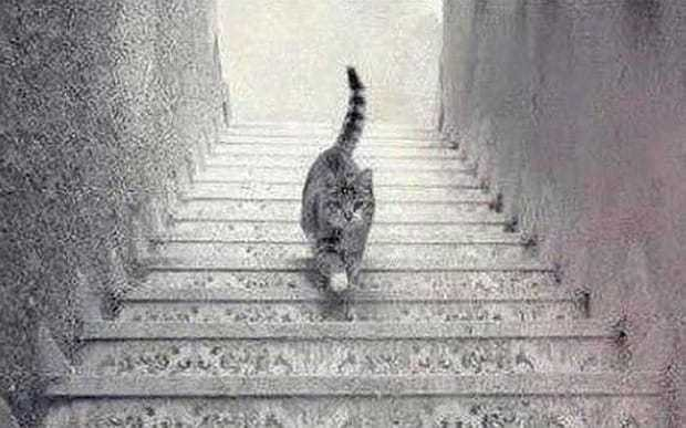 The new dressgate: Is this cat going up or down the stairs?