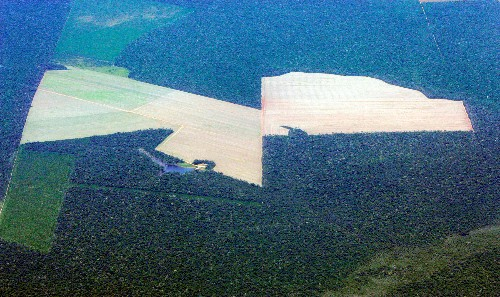 France's EDF faces delay in Brazil dam over clearing trees