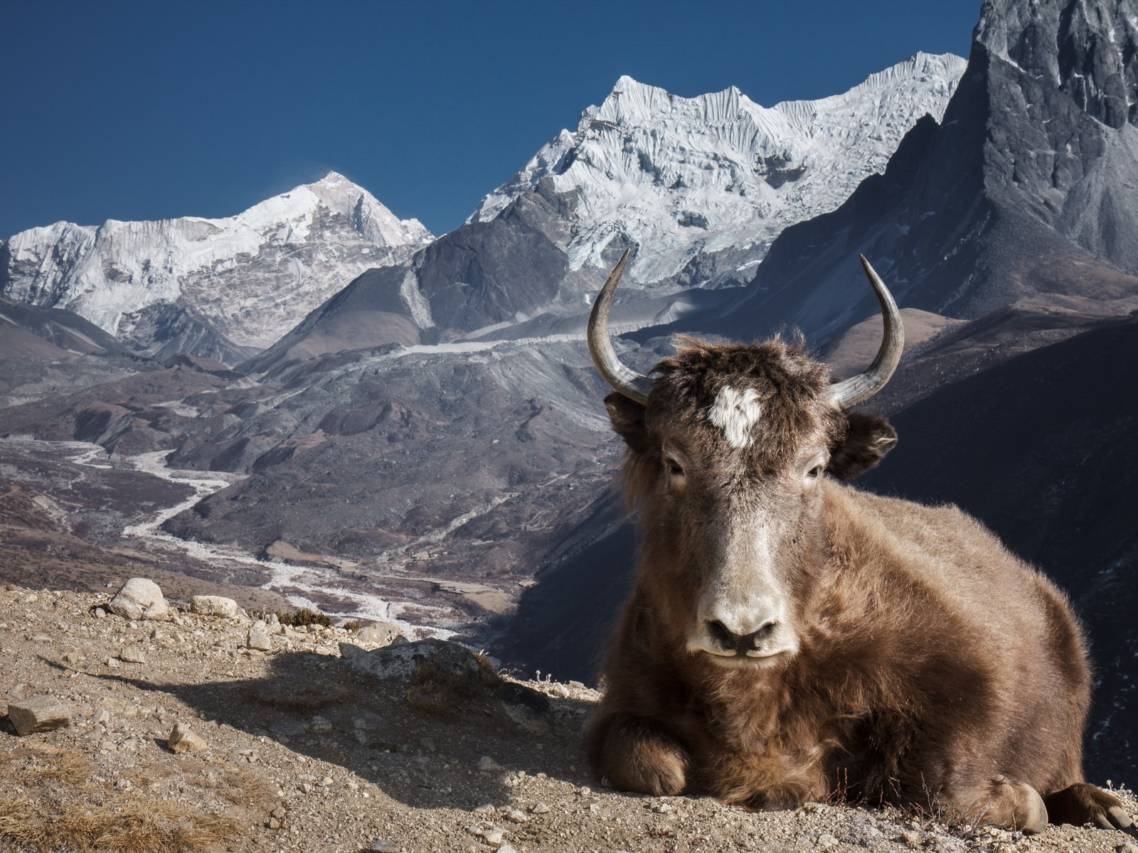 Returning to Everest: trekking to Base Camp after the 2015 earthquake