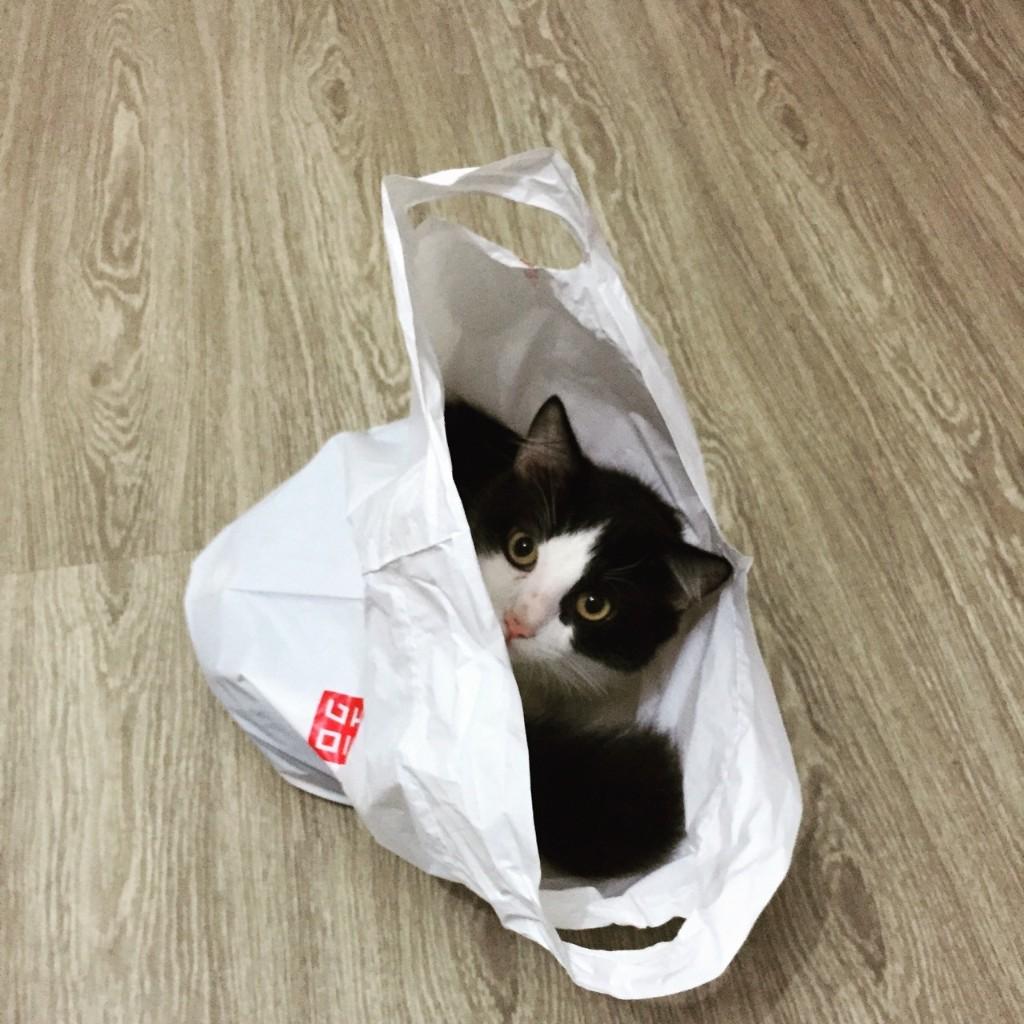Cats Stuff - cover