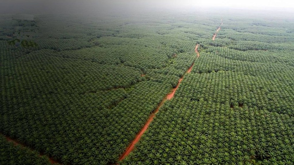 What If We Planted a Trillion Trees?