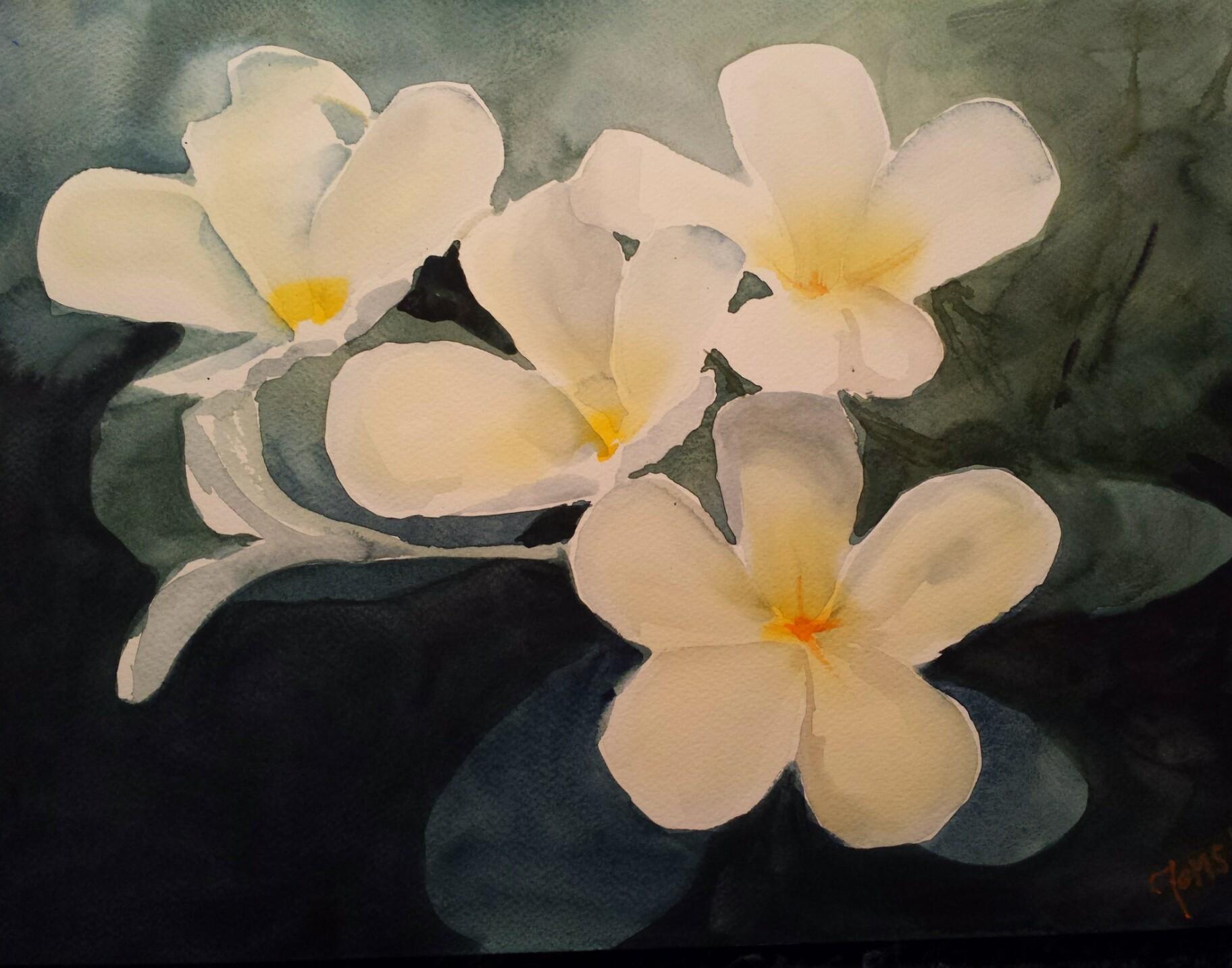 White Plumeria Frangipani flowers