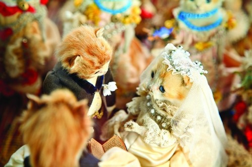 A Dead Cat's Wedding Reveals How Humans Dealt With Death A Century Ago