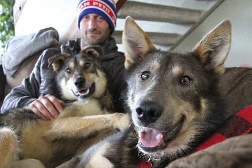 Iditarod musher discounts critics after dogs refused to run
