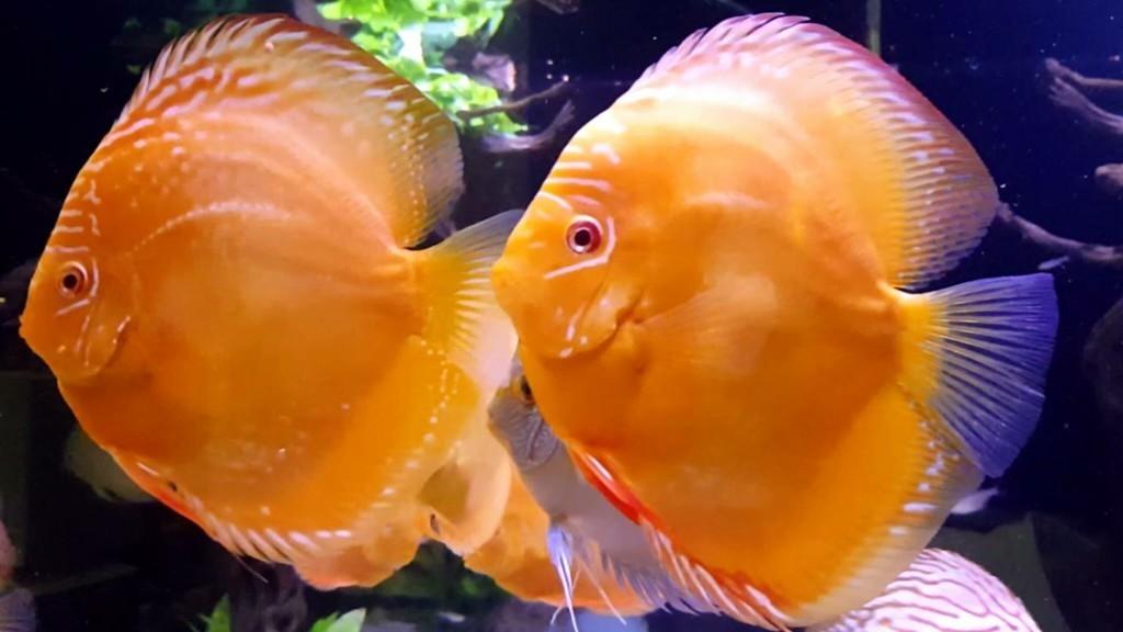 Aquarium ShooTS. cover image