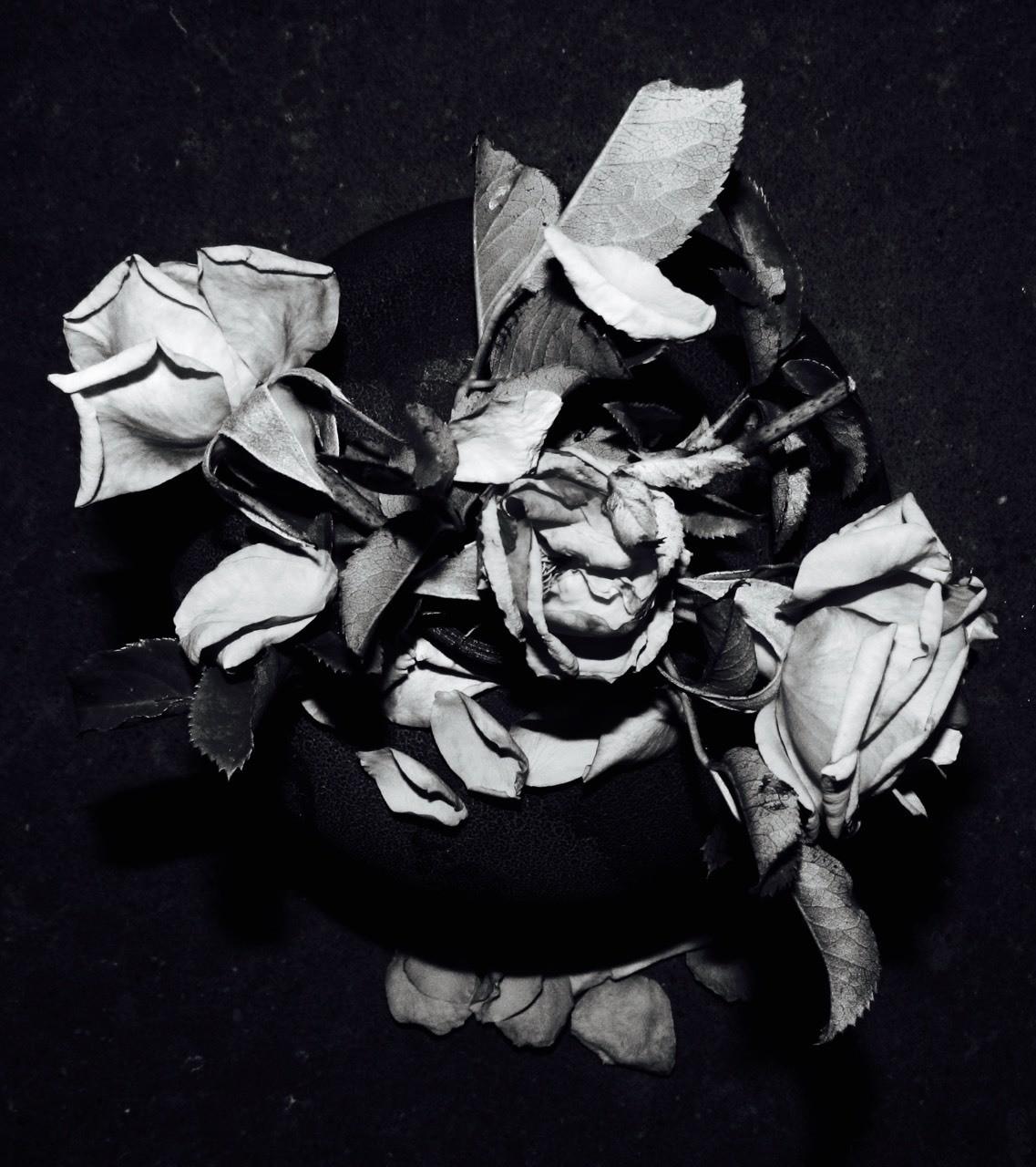 Black & White fading roses