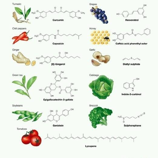 PhytoChemicals