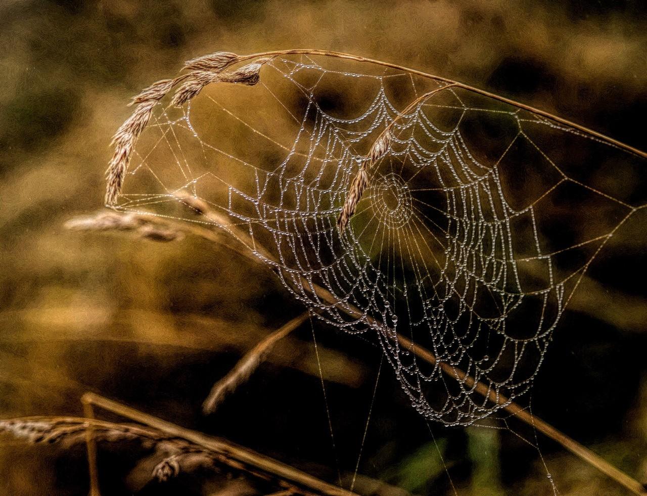 Spiders Den