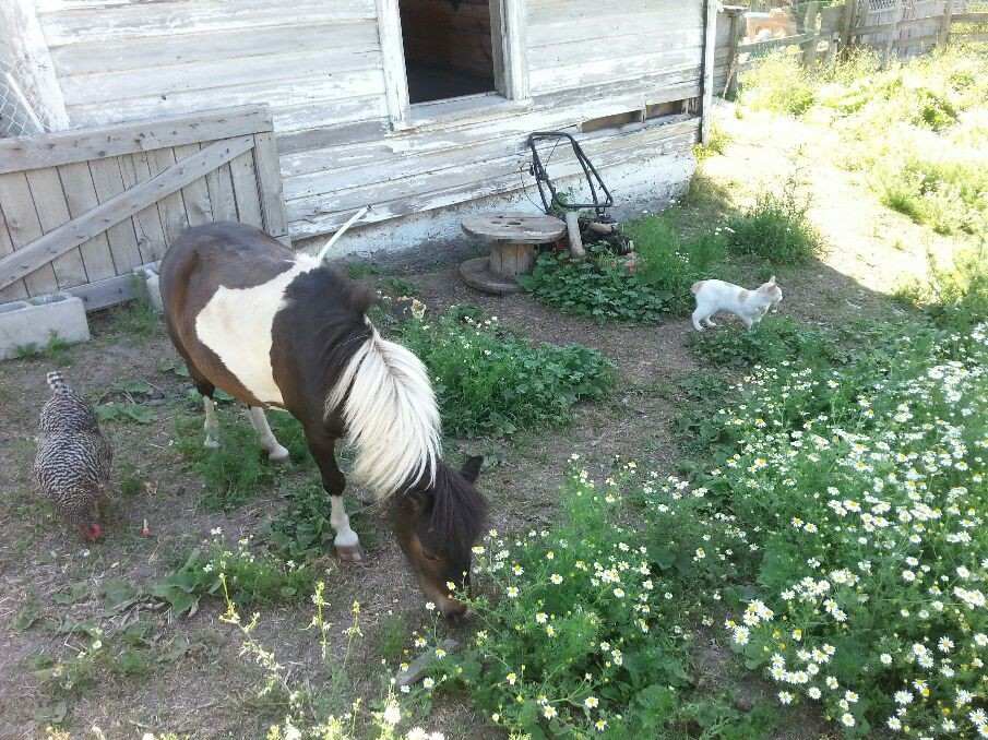 My mini pony Fawnie