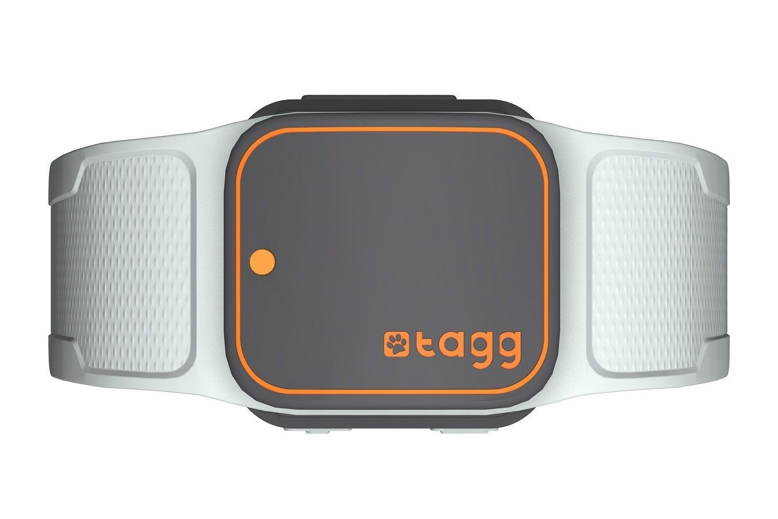 Connected canine outfit Whistle buys competitor Tagg, raises $15M