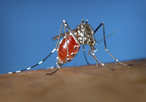 Scientists find new way to kill disease-carrying mosquitoes